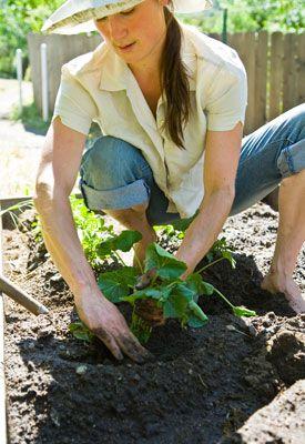 Vegetable Gardening Tips And Tricks Vegetable Garden 400 x 300