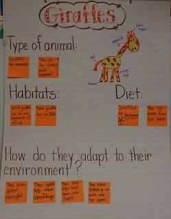 Mrs Jump's class: Zoo unit Day 1 Giraffes - use ideas for class chosen animals
