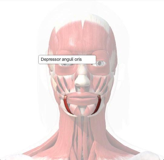 image depressor-anguli-oris-muscle for term side of card