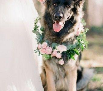 Je hond thuislaten tijdens de grote dag is natuurlijk geen optie. Laat hem een glansrijke bijrol spelen tijdens jullie bruiloft. Laat hem #thevow #trouwen #honden