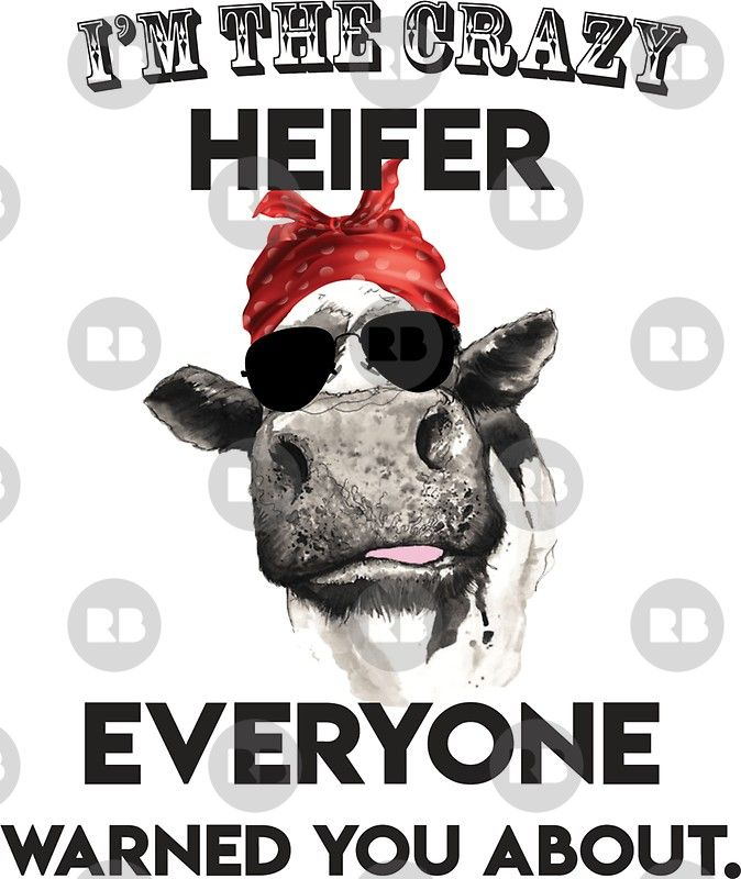 I M Crazy Heifer Everyone Warned You About Sticker By Melchild71 In 2020 Heifer Cows Funny Funny Shirt Sayings