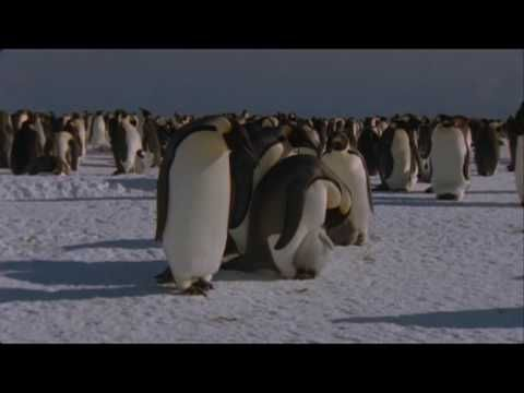 The Penguin Story - YouTube A Short Video On Penguins