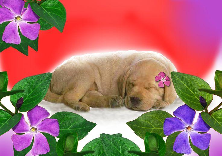 Dog card - Koirakortti