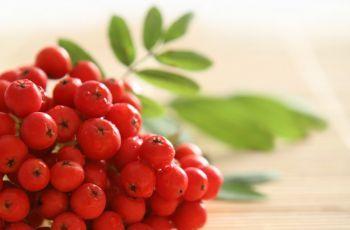 Źródlo witaminy C - jarzębina czerwona | Sposób na wszystko | Porady | Domowe sposoby | Jak zrobić ...?