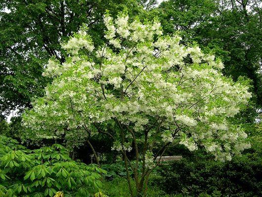 Flower Garden Ideas Northeast 87 best ideas for a native northeastern garden images on pinterest
