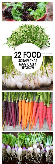 22 Food Scraps that will regrow