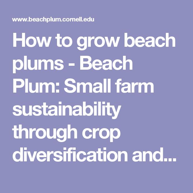 How to grow beach plums - Beach Plum: Small farm sustainability through crop diversification and value-added products.