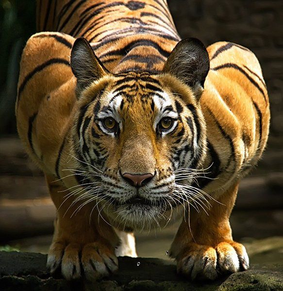 Image result for crouching tiger