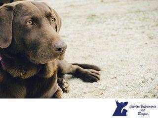 https://flic.kr/p/WqaQQg | Gastritis crónica aguda. CLÍNICA VETERINARIA DEL BOSQUE 1 | Gastritis aguda. CLÍNICA VETERINARIA DEL BOSQUE. La gastritis aguda es la forma más frecuente de gastritis que se presenta en perros y puede aparecer en perros de cualquier edad, esta puede ser causada por infecciones virales, bacterianas, alimentos irritantes y muchas otras causas, por ello es importante traerlos a la Clínica para su diagnóstico y atención. En Clínica Veterinaria del Bosque contamos con…