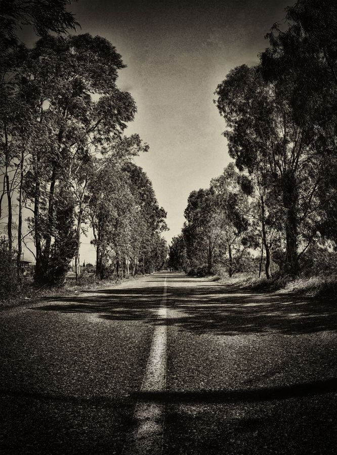 Eucalyptus road, Aigio, Greece