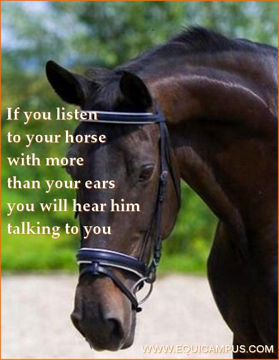 listen to your horse