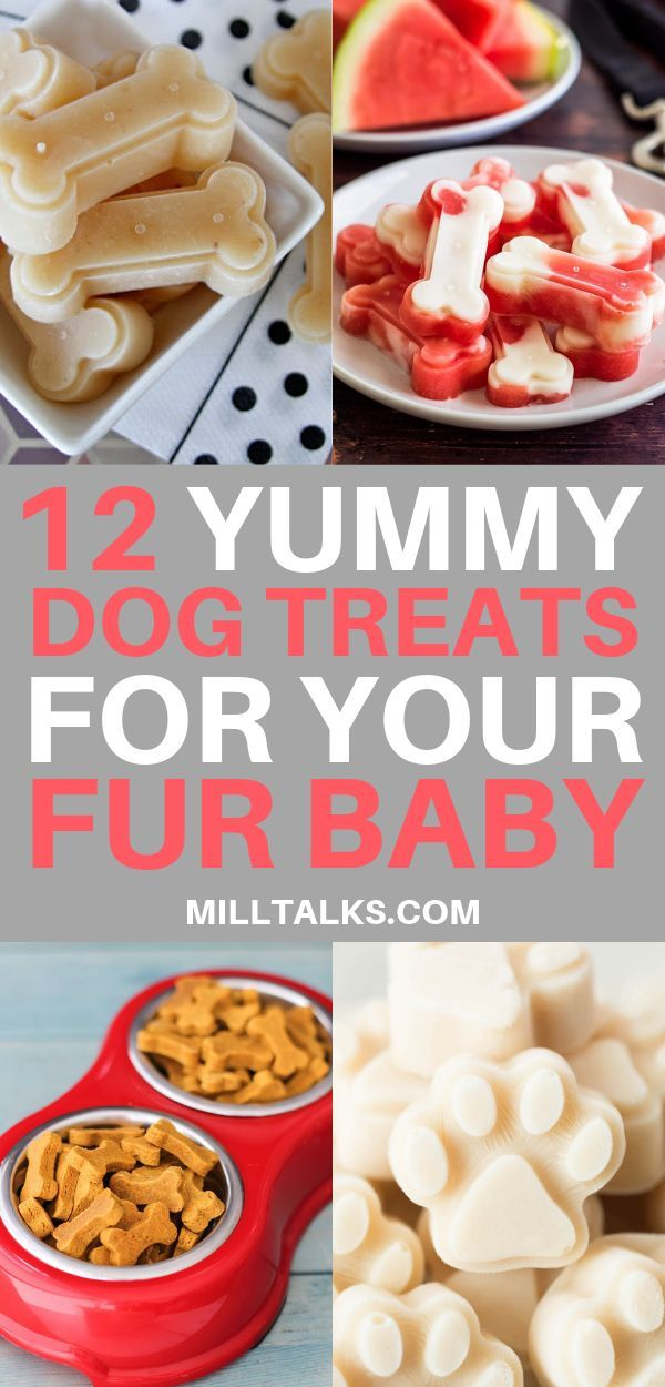12 Yummy Homemade Dog Treat Recipes Dog Biscuit Recipes Dog