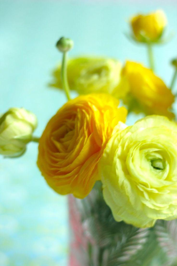 Ranunculus.
