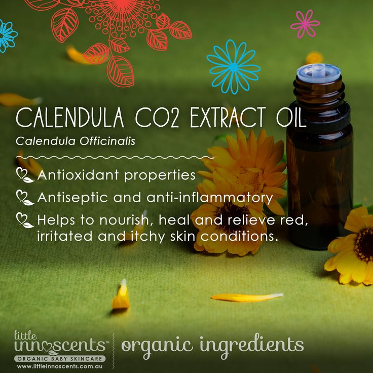 We love Organic Calendula Oil for it's antioxidant properties, as well as being antiseptic and anti-inflammatory and it helps to nourish, heal and relieve red, irritated and itchy skin conditions. You will find calendula in both our @littleinnoscents Intensive Soothing Cream and SPF 30 Natural Sun Lotion.  #organic #organicbaby #certifiedorganic #australiancertifiedorganic #australianorganic #babycare #organicskincare #aloe #calendula #organiccalendula #organicbabyskincare #baby