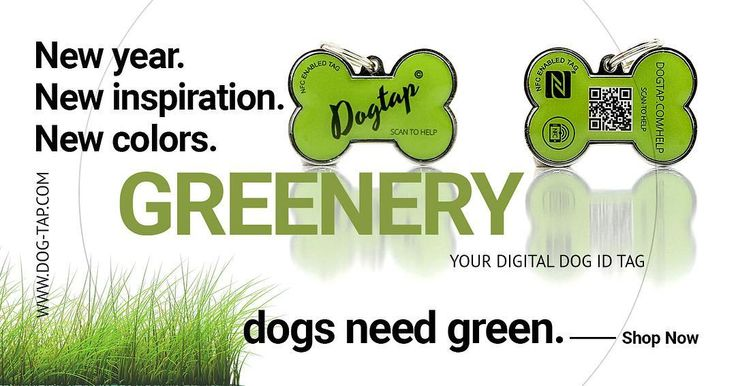 the new DOGTAP SOLID #greenery with metal core and frame and 2 NFC chips! #dog #puppy #pup #Dogtap #nfc #metal #core #doglover #dogs_of_instagram #pet #nfc  #petsagram #dogsitting #photooftheday #dogsofinstagram #ilovemydog #instagramdogs #nature #dogstagram #dogoftheday #lovedogs #lovepuppies #hound #adorable #doglover #instapuppy #instadog Feel safe!  nfc enabled dog id tag. worldwide delivery www.dog-tap.com