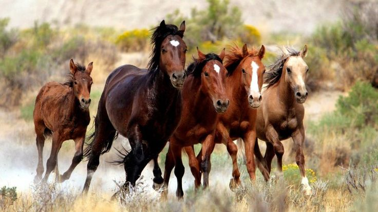 Demand an Urgent Congressional Investigation and Head Count of all Wild Horses and Burros in Captivity and in the Wild    Secret documents reveal the plot from 2008 to kill and dispose of America's wild horses and burros. Read the documents here:  http://protectmustangs.org/?p=9850    Then on September...