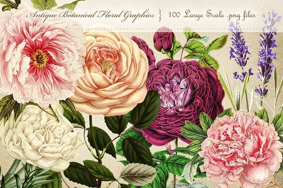 Antique Botanical Floral Graphics by Eclectic Anthology on @creativemarket