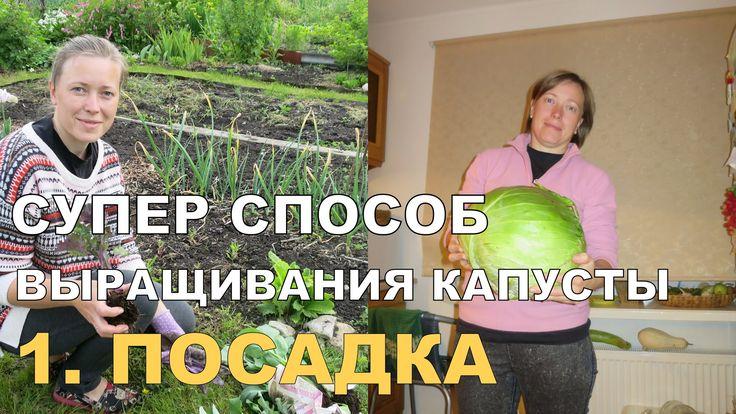 СУПЕР КАПУСТА на спанбонде. ПОСАДКА / Growing Cabbage on Spunbond. 1
