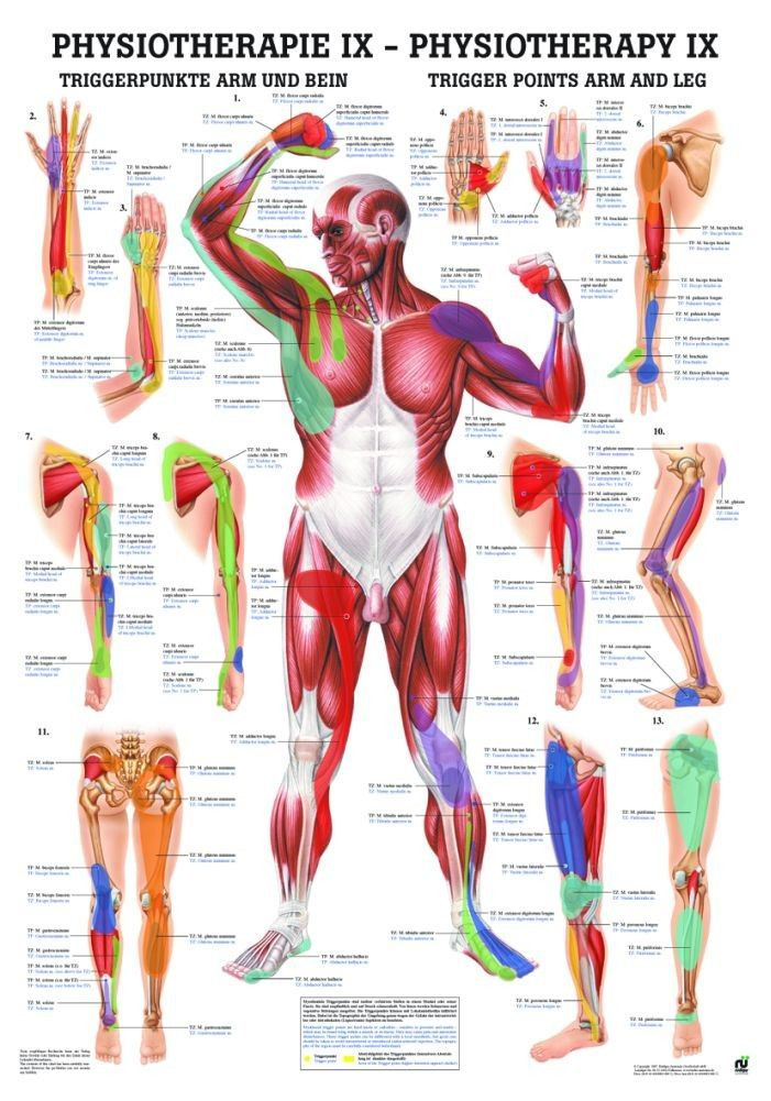 Trigger Points: Arms and Legs Laminated Chart | Massage Therapy ...