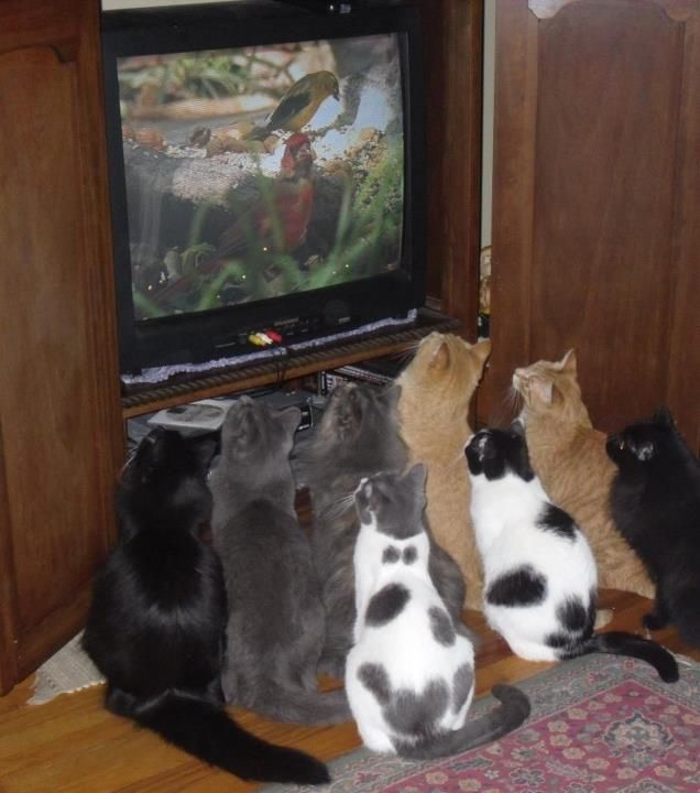 This reminds me of 101 dalmations (the Disney Cartoon original) when they are watching the T.V...only kitty style :)
