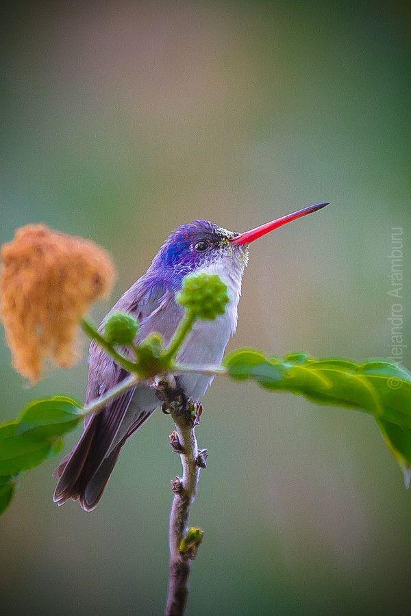 Colorful Hummingbird by Alex Arámburu on 500px