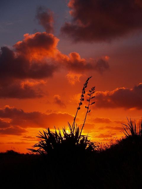 harakeke sunset by deadpossum, via Flickr