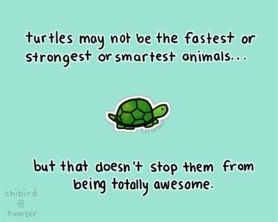 Turtle ❤ | Aira's Site