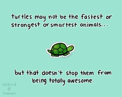 Turtle ❤ | Aira's Site