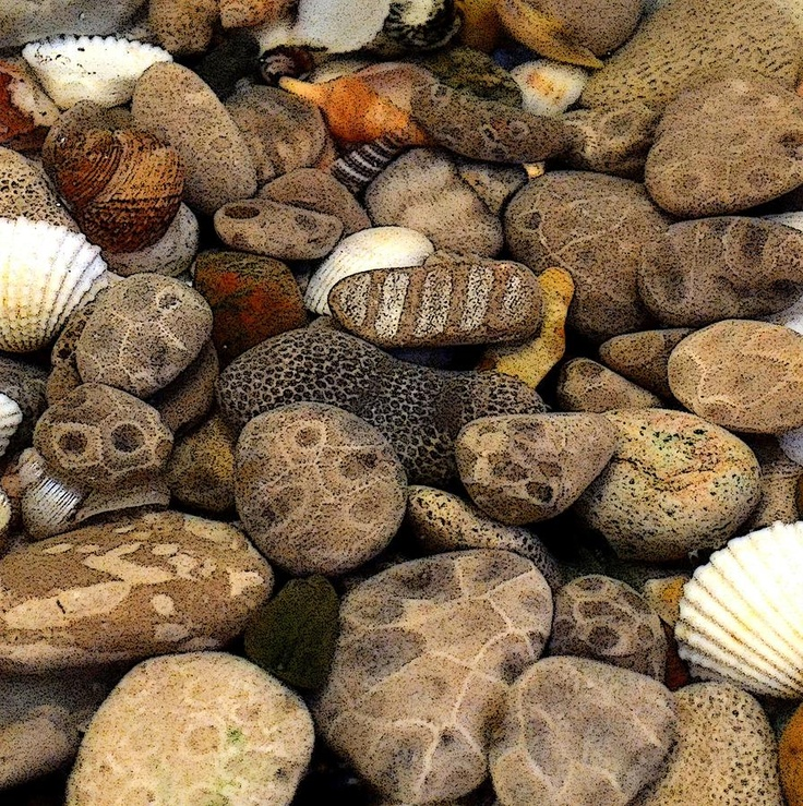 Petoskey Stones with Shells...collection summer 2013. Looking forward to many more additions