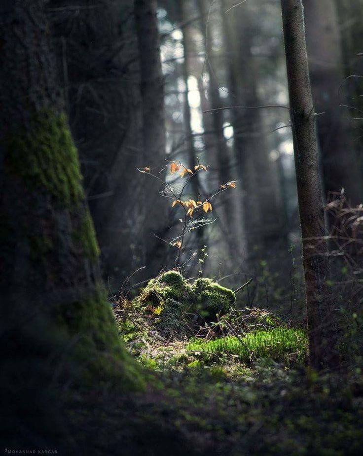зелая в лесу фото создания короткошерстные