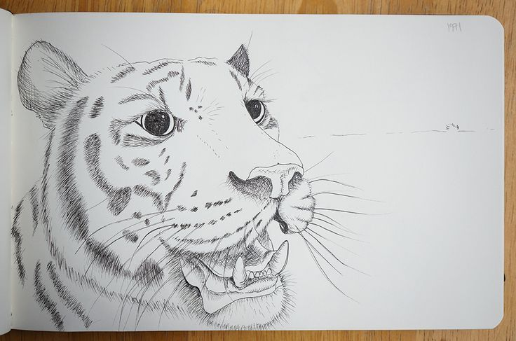 Tiger - Portraits in landscape