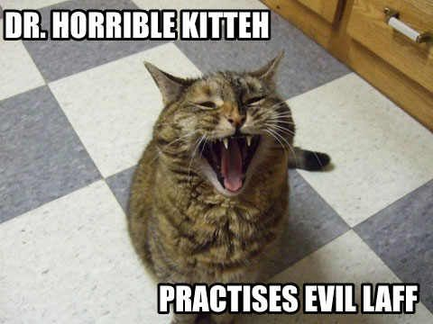 Pin by dww25921 on Zazzle on Evil Cats Bent on Global ...