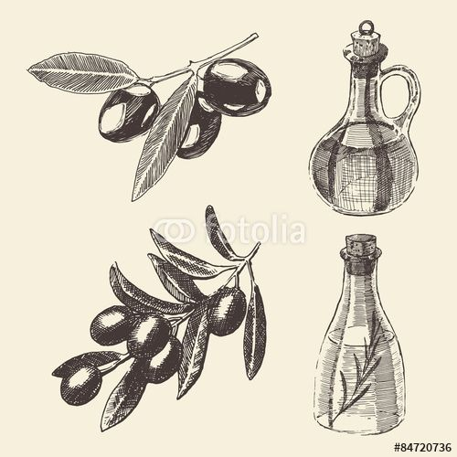 Вектор: Olive Branch Bottle Set Hand Drawn Vector
