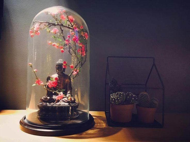 Liefde voor mijn nieuwe #stolp met #boeddha en #kersenbloesem  #cherryblossoms #buddha #glassbell #cactus ❤️ #interiordesign #interior #decoration