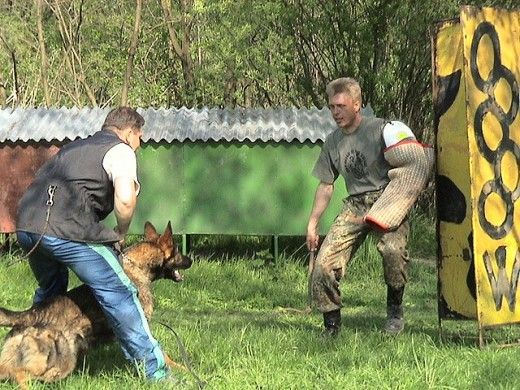 Personal protection dog training.