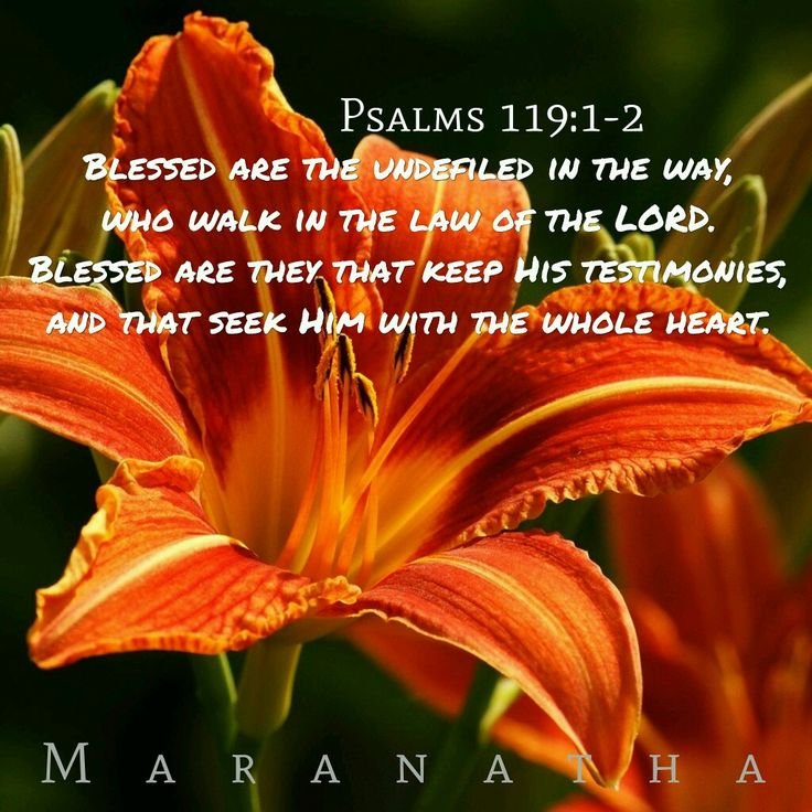 Psalms 119:1-2 (KJV)  Blessed are the undefiled in the way, who walk in the law of the LORD. Blessed are they that keep his testimonies, and that seek him with the whole heart.   MARANATHA ❤