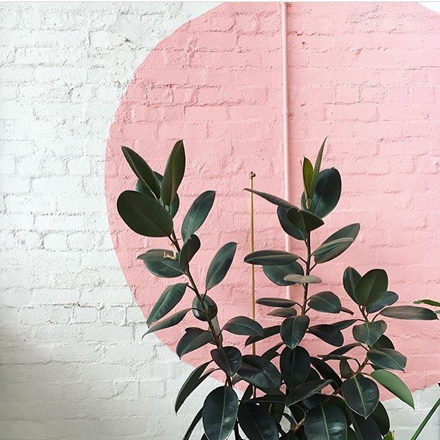 plant on pink