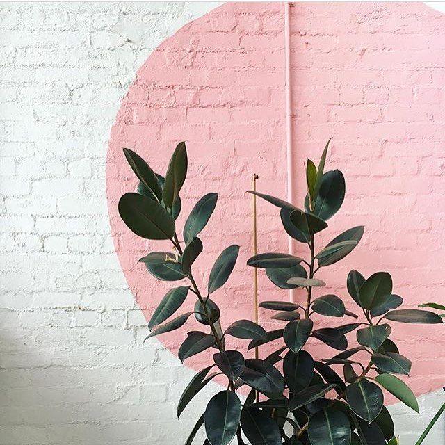 """LOTTE VAN BAALEN on Instagram: """"#PlantsOnPink by @skalagas """""""