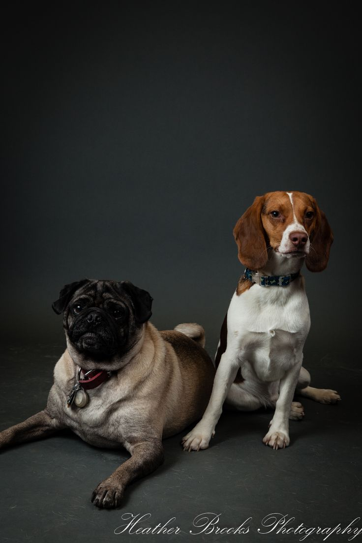 #essexontario #petvalu #petphotography #dog #dogphotography #essexphotographer #windsorfamilyphotographer #dogportrait#funny#cute