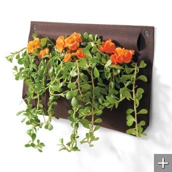 Indoor Living Wall Planter 105 best vertical gardening images on pinterest   vertical gardens