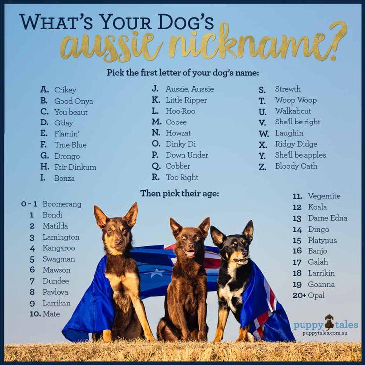 Nick Name Google Search Dog Names Walkabout Buddy