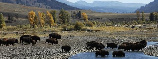Yellowstone National Park | National Park Foundation