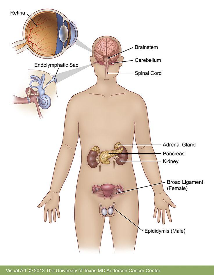 Mejores 9 imágenes de Uro en Pinterest | Medicina, Botones y Cirugia