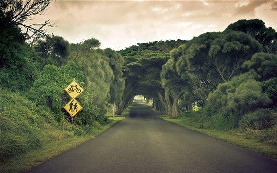 Eine seltsame Landschaft, Bäume Straßen-Kanal Hintergrundbilder Vorschau