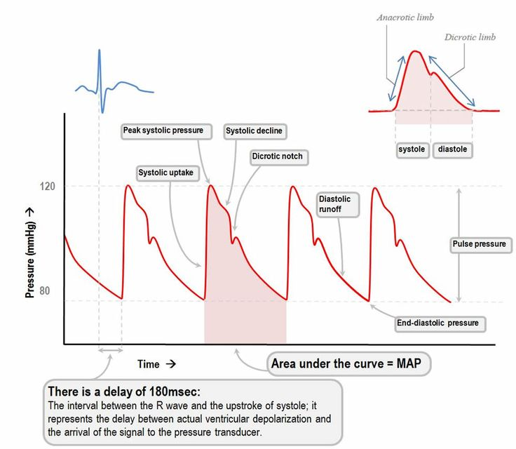 cardiac output and blood pressure relationship to height
