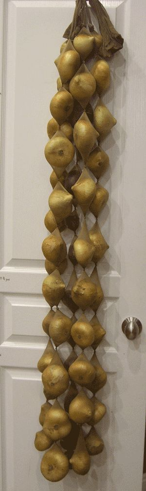 Using stocking to store onions so they get plenty of airflow and don't go moldy. What a great idea!