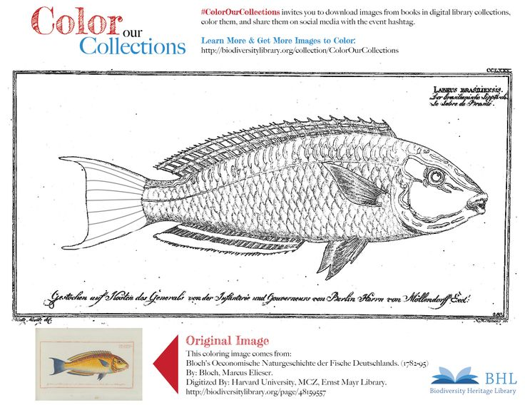 43 Best Images About BHL Coloring Pages On Pinterest