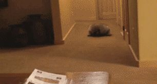 22 Gifs Of Animals Being Sassy - Funny Gallery