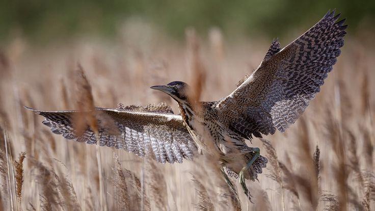 Wicken Fen Nature Reserve | National Trust