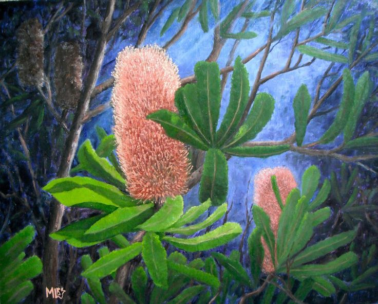 'Blue Mountains Banksia' one of my favourite flower paintings has sold at the Birregurra Art Festival. I hope it is happy in it's new home.